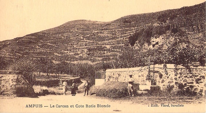 A circa 1940s postcard.  Note just how much of Côte Rôtie's slopes were <em>en friche</em>—overgrown by trees and bushes.  The back-breaking work of clearing it, and planting new vines in the rocks, took years.